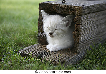little white kitten sleeping while laying just inside an old weathered bluebird house
