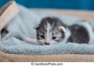 Kitten sleeping on bed