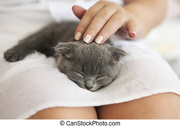 Kitten slepping on young woman hands