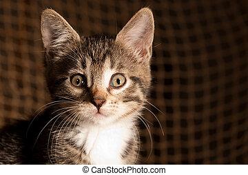 Kitten - Small kitten portrait against the fisherman's net