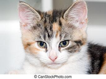 Kitten - Small kitten