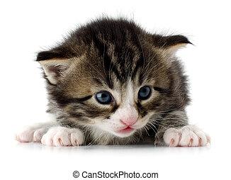 kitten - New born kitten on white close up