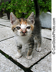 kitten - Nice kitten