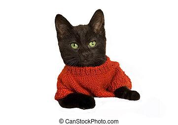Kitten wearing a jersey - A cute kitten wearing a red...