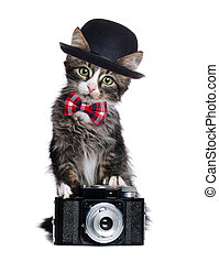 Kitten wearing bow tie and a bowler hat holding the retro photo camera