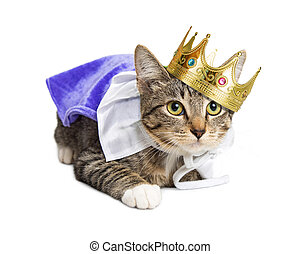 Kitten wearing prince costume - Cute kitten wearing royal...