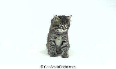 kitten which looks around isolated on a white background
