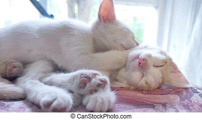 kitten white cat sleeping on a red kitten funny friendship pets slow motion video