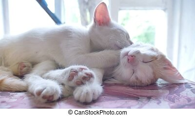 kitten white cat sleeping on a red kitten funny pets friendship slow motion video