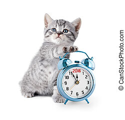 kitten with alarm clock displaying 2016 year
