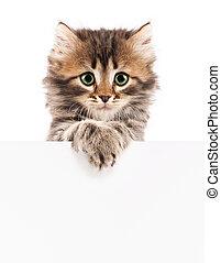 Kitten with blank - Pretty kitten peeking out of a blank...