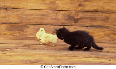 kitten with chickens on a wooden table