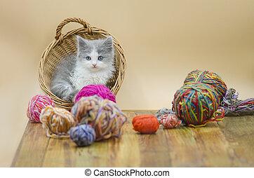 Kitten with colorful wool yarn balls