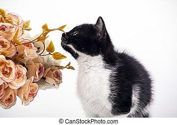 Kitten with flowers
