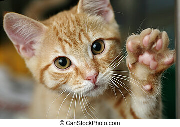 Cute ginger kitten with his paw up