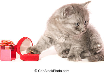 kitten with jeweller ornaments