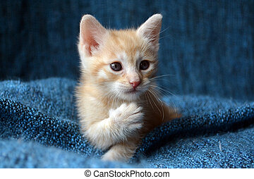 kitten with paw up