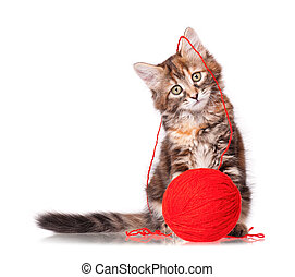 Kitten with red clew of thread - Cute kitten playing red...