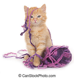 Kitten with wool ball isolated