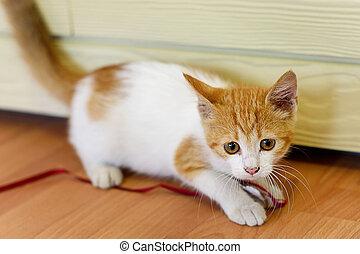 kittenkitten, 木製のおもちゃ, 遊び, 床
