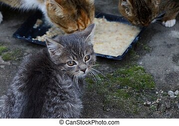 kittens and a cat with a bowl and fodder in the yard on the street