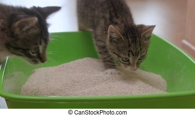 Small gray kittens examine green plastic cat litter box with clay litter on floor