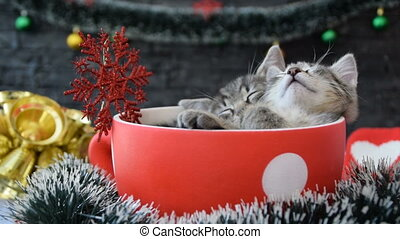 Kittens are sleeping in the large cup, among the New Year's decorations