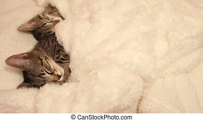 Kittens asleep tucked in a white blanket