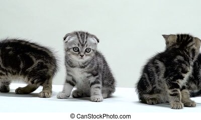 Kittens creep and look around. White background. Slow motion...