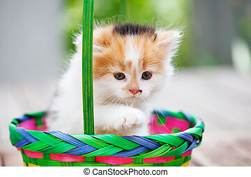 Kittens in a colorful basket