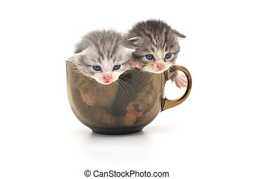 Kittens in cup - cute kittens in glass cup