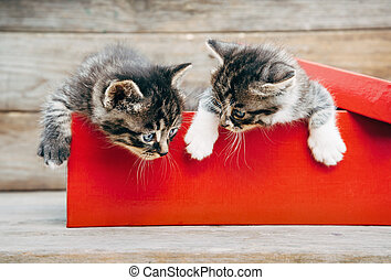 Kittens in the box