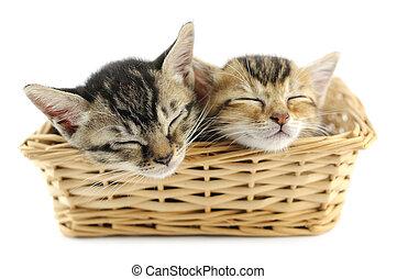 Lovely kittens sleeping in wicker basket, isolated on white