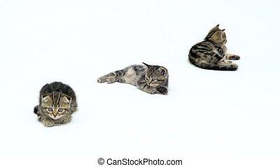 Kittens lick their feet lying on the floor. White...