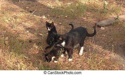 Kittens on a walk