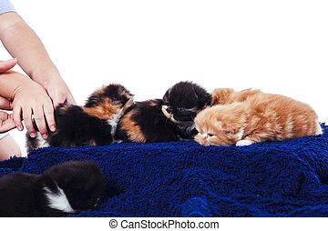 kittens on wood box.