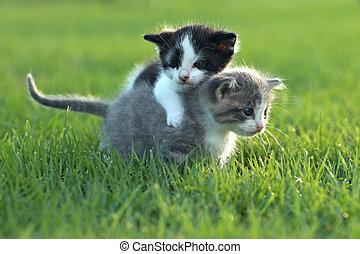 Kittens Outdoors in Natural Light - Cute Little Kittens...