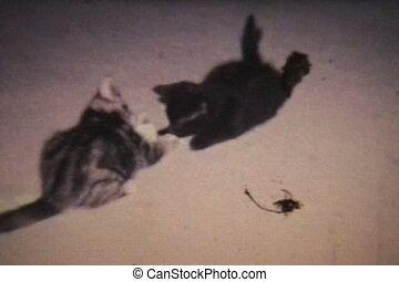 Kittens Playing (1968 - Vintage)