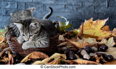 Kittens playing in the leaves