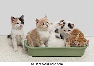 Kittens sitting in cat toilet - Little kittens sitting in...