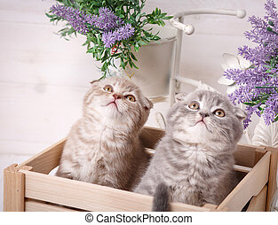 Kittens sitting in the drawer and looking up