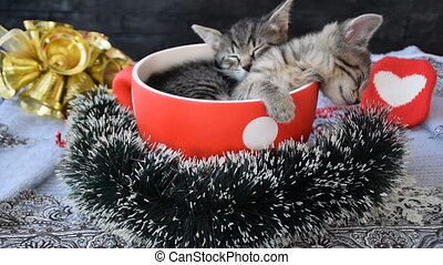 Kittens sleeping in a cup on the dotted in holiday atmosphere