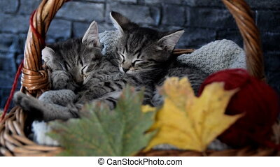 kittens sleeping in a wicker basket with leaves and red ball of string