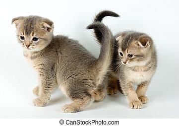 Kittens - Two kittens
