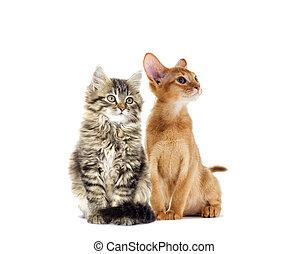 kittens watching
