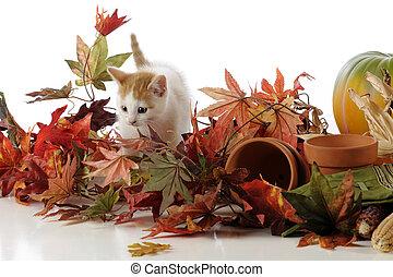 Kitty among Leaves