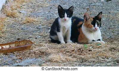 Kitty and her mom calico cat looking at camera whle lying on dirt