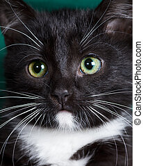 Kitty - Close-up portrait of a black kitten
