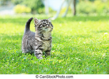 Kitty - Cute little cat on the grass looking up