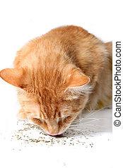 Kitty eating catnip